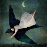 Las alas de Lady Pájaro